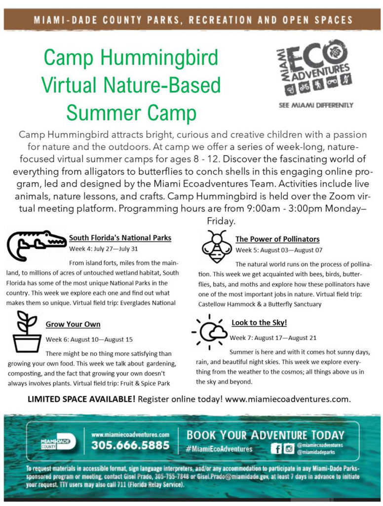 virtual camp flyer